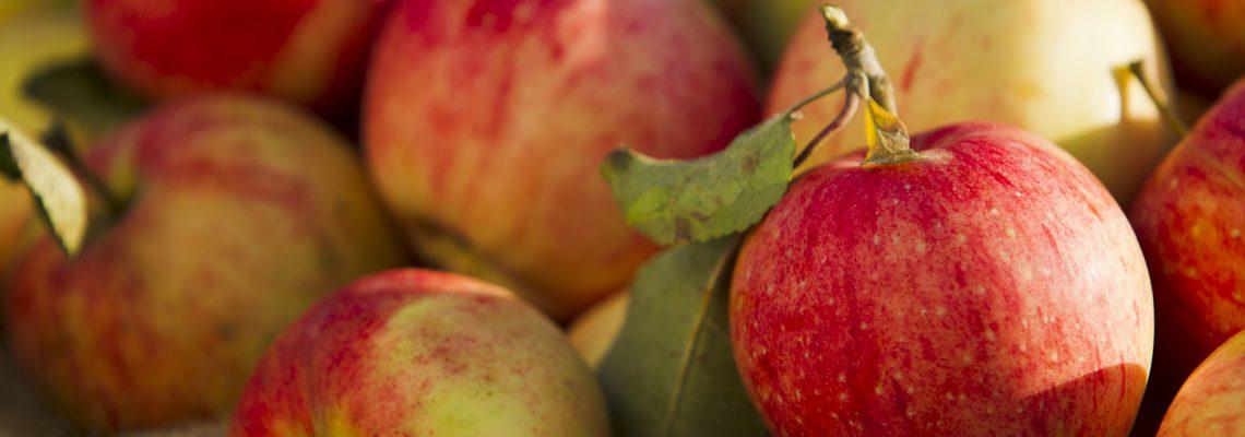 NC Apples