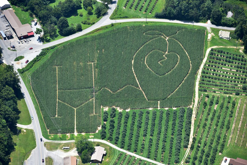owenbys-orchard-corn-maze